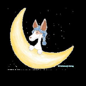 Amigo und der Mond